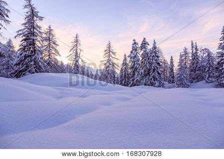 Winter forest in Julia Alps near Vogel ski center Slovenia-Europe