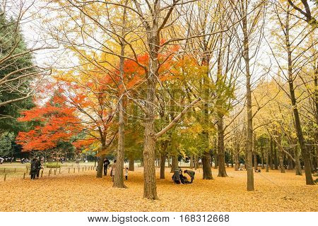 leafless trees and changing leaves to yellow and orange in autumn