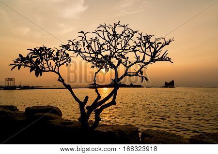 silhouette of tree The atmosphere during sunset at Koh Loy SrirachaChonburiThailand