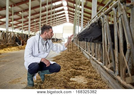agriculture industry, farming, people and animal husbandry concept - veterinarian or doctor communicating with cows in cowshed on dairy farm