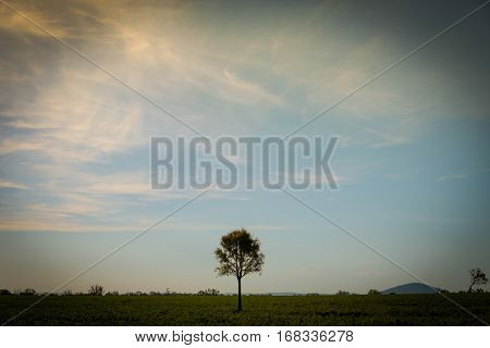A lovely lone tree in a big field with a cool sky