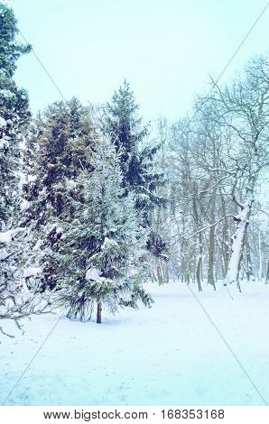 Beautiful Park In The Winter