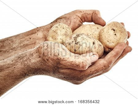Dirty potatoes in male hands isolated on white background