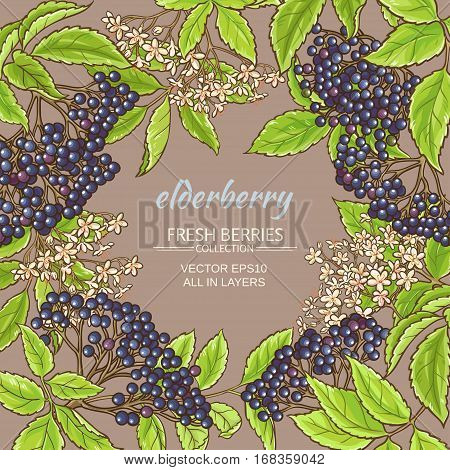 elderberry branches vector frame on color background