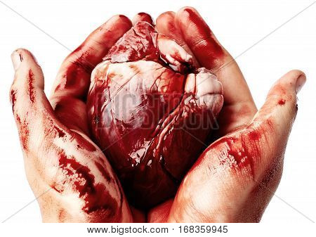 Big bloody heart in male hands isolated on white background