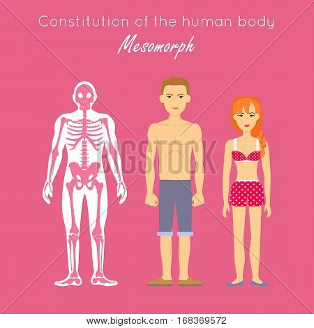 Constitution of human body. Mesomorph. Hard, rugged, triangular, athletically built with muscles, thick skin and good posture. Risk taking person. Vigorous, courageous, assertive dominant Vector
