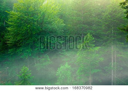 Beautiful green forest background in Julia Alps -Slovenia