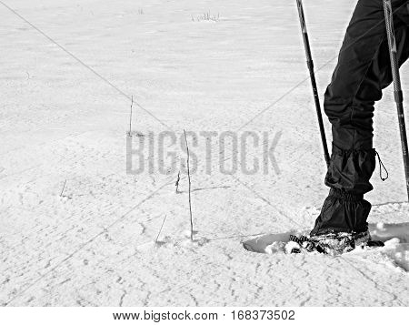 Man Legs With Snowshoes Walk In Snow. Detail Of Winter Hike In Snowdrift
