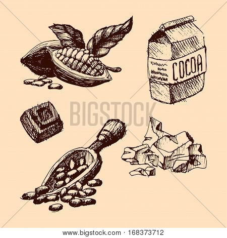 Vector cocoa hand drawn sketch. Doodle food chocolate sweet illustration. Vintage style plant natural bean ingredient. Organic cacao tropical menu symbol.