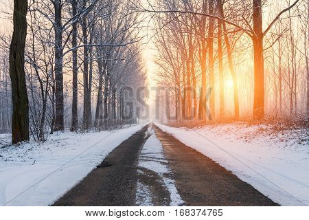Winter rural road among frosted trees illuminated by the morning sun.Hungary