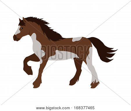 Running pinto horse flat style vector. Domestic animal. Country inhabitants concept. Illustration for farming, animal husbandry, horse sport companies. Agricultural species. Isolated on white