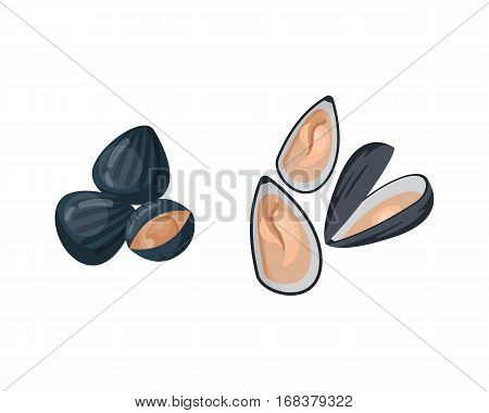 Fresh mussel gastronomy ingredient on white background. Shellfish nutrition nature food. Dinner cooked gourmet healthy cuisine seafood vector.
