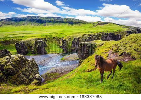 The canyon in Iceland. The Icelandic Tundra in July. Thoroughbred horse grazes on a cliff. Bizarre shape of cliffs surround the stream with glacial water