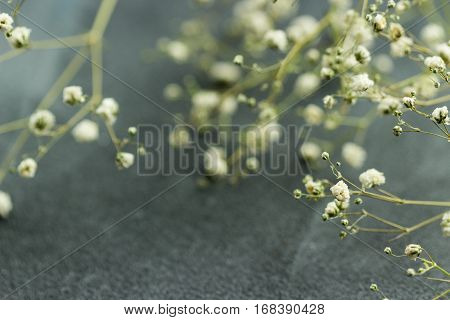 Dried white flowers gybsophila on grey background in kinfolk style. Selective focus.