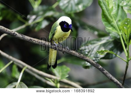 one lovely and noisy exotic bird many buetiful color