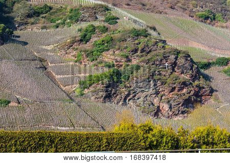 View of vineyards in beautiful Moselle valley in Germany