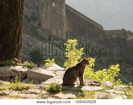 Cat sitting in sunset light at the fortress