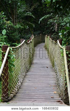 Wooden Pathway Into Rain Forest Jungle