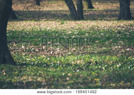 Undergrowth forest or park covered with first spring flowers. Vintage styled.