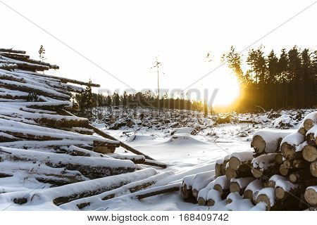 A large number of logs, stacked wood in the winter. In the background, the forest and the sun is shining.