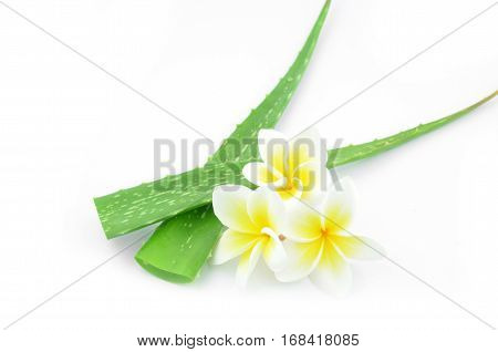 Aloe vera and plumeria decorated for a spa or skin cream is placed on a white background.