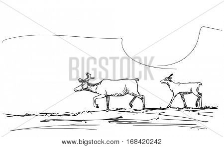 Sketch of two walking reindeer, Hand drawn vector illustration