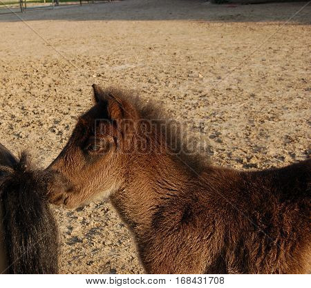 cute and brown foal in the paddock