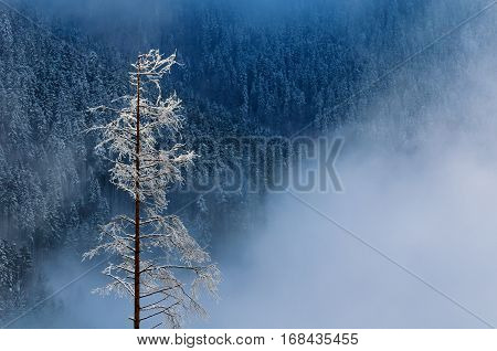 Detail Of Tree Covered By Snow In Mala Fatra, Slovakia.