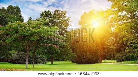 a beautiful summer park and sun rise