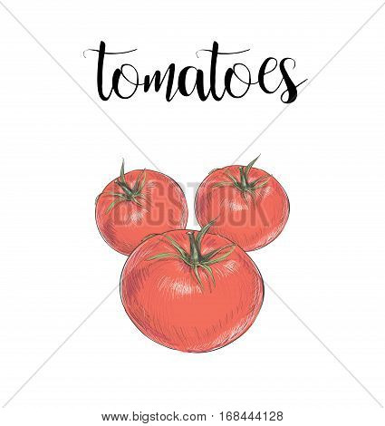 Tomatoes color illustration vector skech. red tomatoes