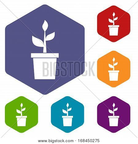 Plant in clay pot icons set rhombus in different colors isolated on white background