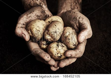 Potatoes in male hands on black background
