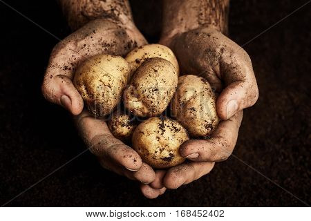 Potaoes in dirty male hands. Agriculture background