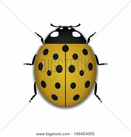 Ladybug Yellow Realistic Cartoon Icon