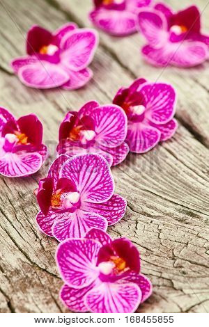Purple orchid flowers on vintage wooden background