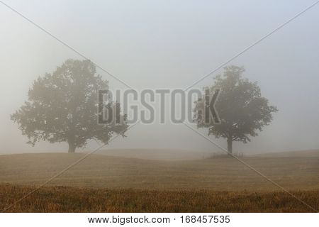 fog trees in autumn corn - crop