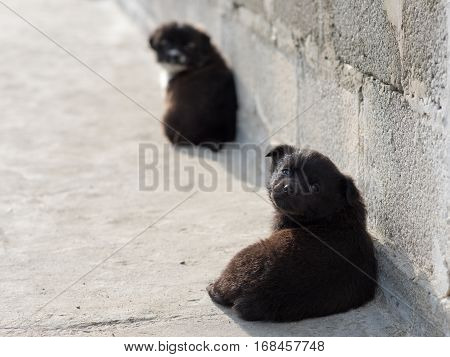 Very cute black puppies. Beautiful puppies. little puppies.