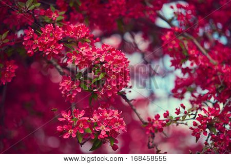 Spring blooming tree. Beautiful flowers. Nature background
