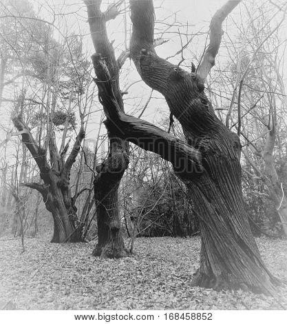 A walk in weird weird woods spooky trees