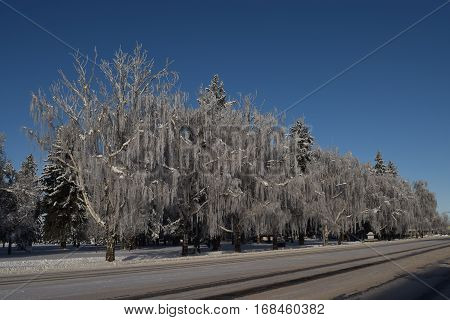 the ice covered trees on a snow covered street