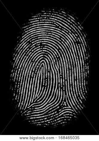 Illustration of black and white fingerprint in high definition and detailing. Good as mask or alpha channel.