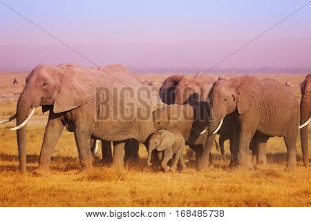 Close-up picture of elephant family walking in sunset light in Maasai Mara National Reserve, Kenya, Africa