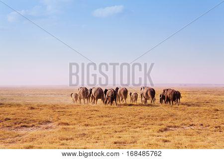 Back view of big herd of elephants walking in waste Kenyan savannah, Africa