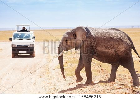 Tourists in safari jeep watching and taking photos of elephant crossing the road in Amboseli national park, Kenya