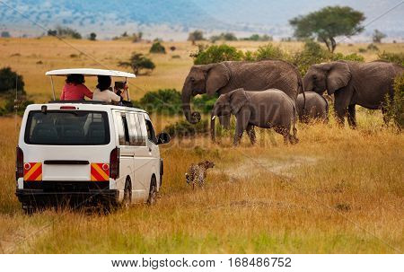 Tourists on game drive taking pictures of elephants in Masai Mara National Park, Kenya, Africa