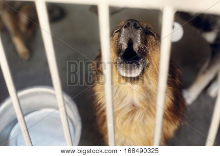 Sad Puppy Crying Howling In Shelter Cage, Unhappy Emotional Moment, Adopt Me Concept, Space For Text