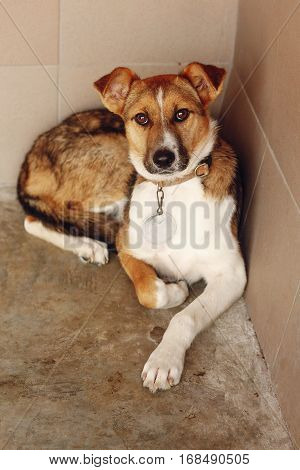 Sad Dog Lying In Shelter Cage, Sad Emotional Moment, Adopt Me Concept, Space For Text