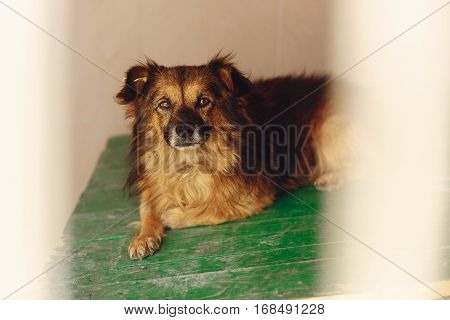 Cute Little Dog In Shelter Cage With Sad Eyes, Emotional Moment, Adopt Me Concept, Space For Text
