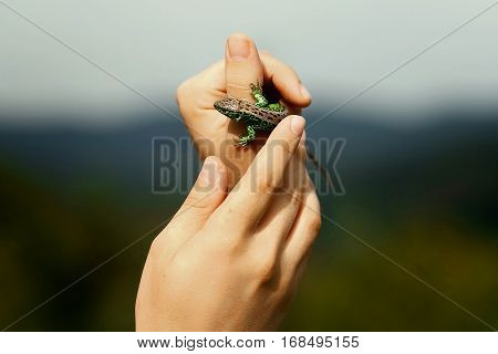 Man Holding In Hands Colorful Green Lizard On Background Of Woods In Summer Mountains, Space For Tex