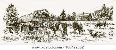 Cows grazing on meadow. Barn on the background. Hand drawn illustration.